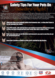 The Best Bonfire Night Safety Tips For Pets